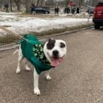 happy dog at a parade